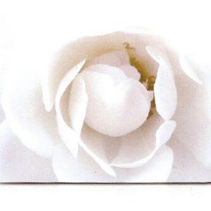 estor-enrollable-impresion-digital-screen-gallery-flores-0437
