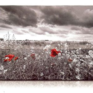 estor-enrollable-impresion-digital-screen-gallery-flores-0444