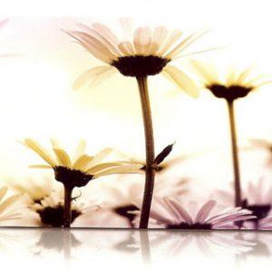 estor-enrollable-impresion-digital-screen-gallery-flores-0445